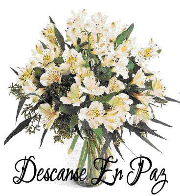 imagenes de flores para un amigo im 225 genes con mensajes de sentido p 233 same para un amigo o