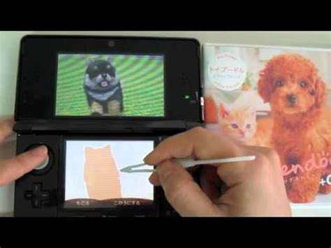 nintendogs pomeranian 3ds nintendogs cats pomeranian how to save money and do it yourself