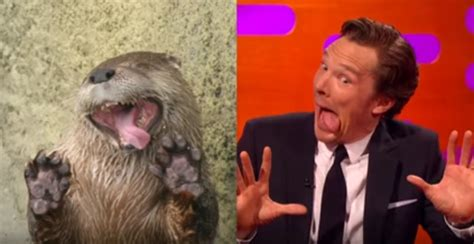 Cumberbatch Otter Meme - benedict cumberbatch embraces his inner otter on graham