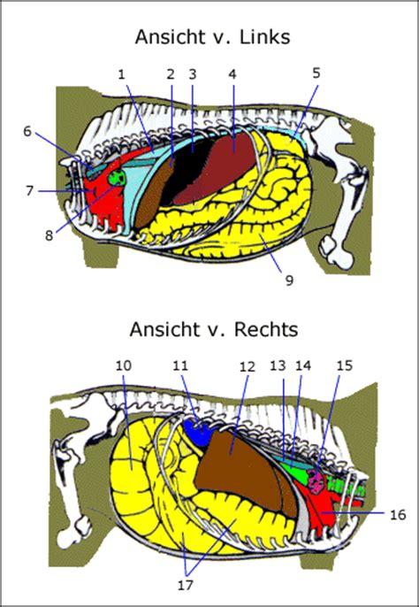 anatomie innere organe innere organe new calendar template site
