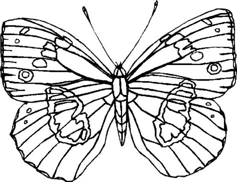 types of butterflies coloring pages butterfly coloring pages colorful blue butterfly