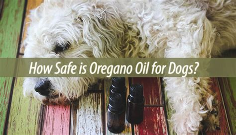 oregano for dogs how safe is oregano for dogs home remedies guide