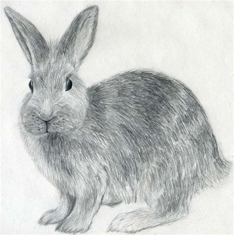how to a rabbit how to draw a rabbit