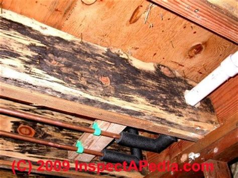 removal   occurring mold mildew  wood deck frame