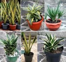 tips membuat tanaman hias rumahan  tetap segar