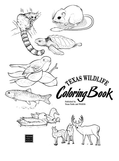 coloring page horned lizard texas coloring pages coloring home