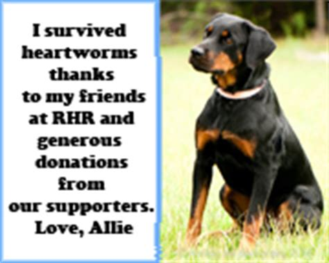 how much does a rottweiler cost rottweiler hearts rescue frquently answered questions