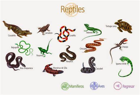 imagenes animales que respiran por la piel los animales los animales vertebrados