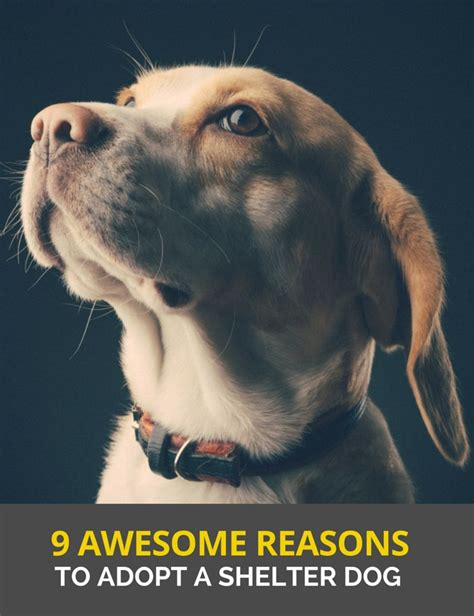 8 Reasons To Adopt A Pet Rather Than Buy by 17 Best Rescue Quotes On Rescue Dogs