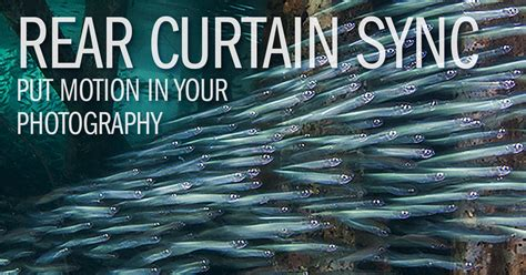 rear curtain sync underwater camera articles rear curtain sync put motion