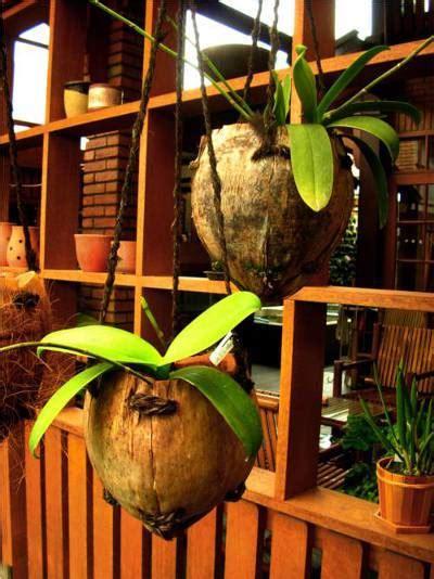 Pot Anggrek Sabut Kelapa kreasi pot unik dari buah kelapa new iqmal tahir s