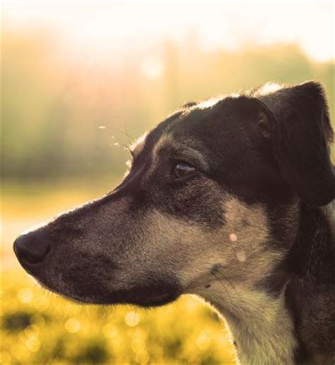 breathing problems in dogs breathing problems in dogs 3 high risk breeds