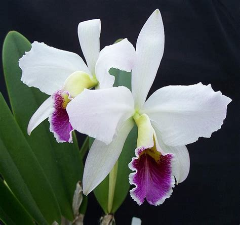 Indoor Flowering Plants That Don T Need Sunlight 6 ways to care for orchids wikihow