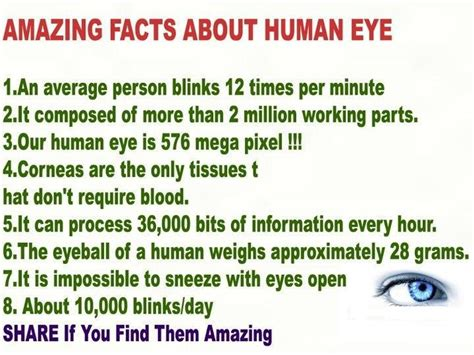the top 7 amazing and exciting things to do in hong kong factsram amazing facts about human eye