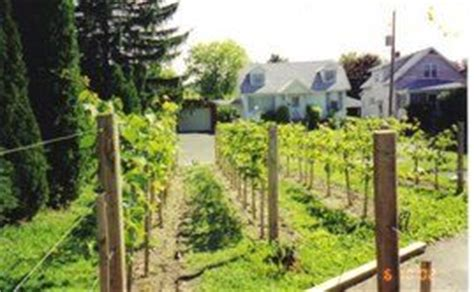 small backyard vineyard 17 best images about backyard vineyard on pinterest a video vineyard and in the spring