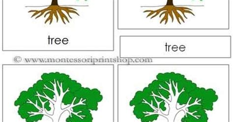 montessori tree printable tree nomenclature cards printable montessori