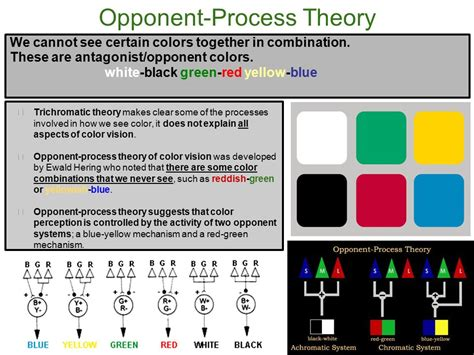 opponent process theory of color psych ms shirley unit 2 sensation perception vision