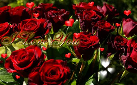 love you heart and roses love you mr arrogant forever quotes so much images baby to