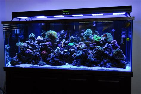 Led Aquarium Lighting by Ledbot Led Lighting For Fish Tank Aquarium