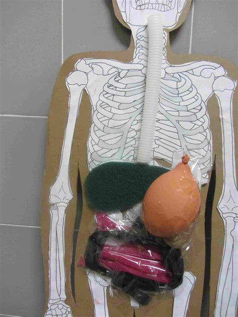 como aser sistema circulatorio con materiales reciclables como hacer un aparato circulatorio con material reciclable