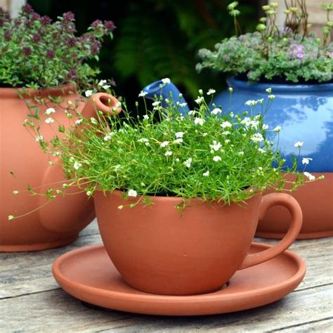 Teacup Planter by Teacup Saucer Planters Terracotta Uk The Home Of