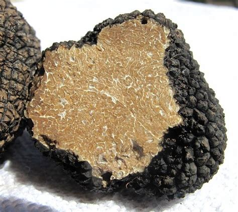 cuisiner la truffe conserver et cuisiner la truffe guide astuces