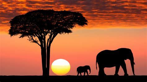 imagenes i love kenia wangari maathai la primera africana que recibi 243 un nobel