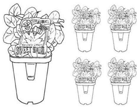 herb garden coloring pages bunnings basil printable to colour craft found