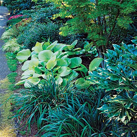 create a shady border jersey plants direct blog
