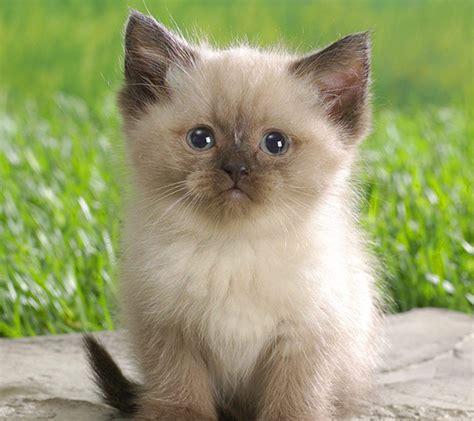 puss in s eye cat katase