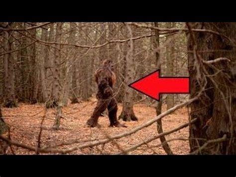 bigfoot 9 monster best 25 bigfoot sightings 2016 ideas on pinterest new