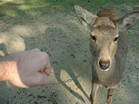 deer attacks deer attack water salad sushi conveyor belt tokyo day japan photo gallery