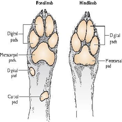 how to dogs to on pads 53 best images about pad footpad on merry sushi rolls