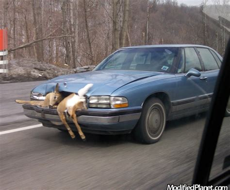 how things work cars 1994 buick park avenue instrument cluster 1994 buick park avenue hits deer and keeps driving