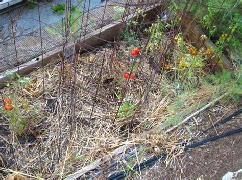 root vegetable garden top ten vegetable gardening mistakes root simple