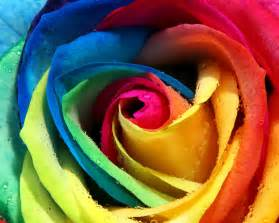 colorful flower colorful wallpapers hamzafiaz