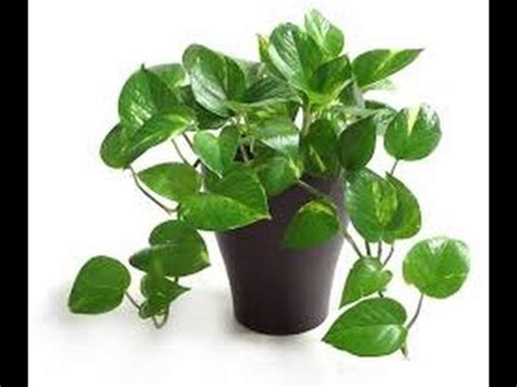 Indoor Plants To Clean Air by 10 Indoor Plants That Clean The Air And Remove Toxins