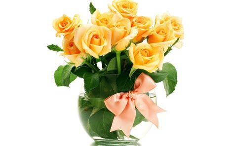 fiori di colore scarica sfondi fiori di colore giallo giallo un