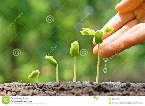baby plants baby plants seedling stock photo image 56751277