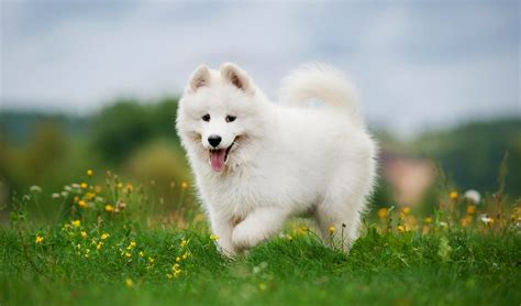 beautiful puppy dogs 35 most beautiful breeds in the world
