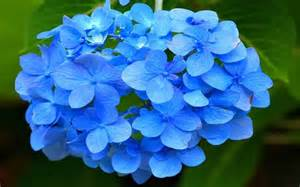 Top 35 most beautiful flowers in the world to look at