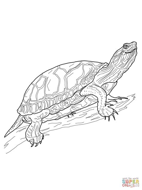 coloring page painted turtle western painted turtle coloring page free printable
