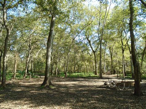 Brazos Bend State Park Cabins by Brazos Bend State Park Youth Cing Area 16 Person