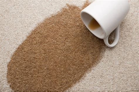 remove coffee stains  carpet
