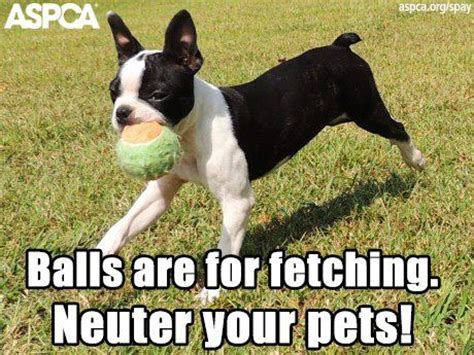 Aspca Meme - it s national spay neuter month share one of our awesome memes awesome meme national months