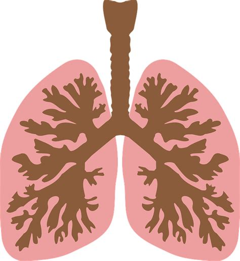 imagenes png vectores vector gratis tr 225 quea v 237 as respiratorias imagen gratis