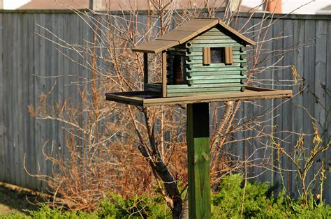 bird feeder living life in glorious colour