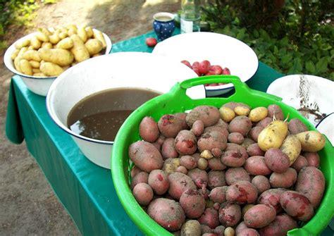 wann sind kartoffeln gar kartoffeln anbauen lagerkartoffeln f 252 r die