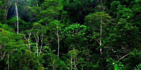Walatra Sehat Mata Jakarta Kota Jakarta Timur Daerah Khusus Ibukota Jakarta pengelolaan hutan dan lahan di indonesia sangat buruk