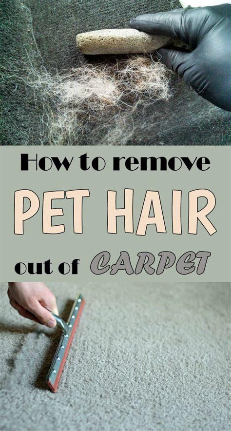remove pet hair   carpet cleaninginstructorcom